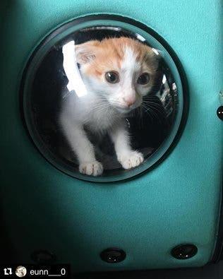 catpacks-mochilas-para-gatos3