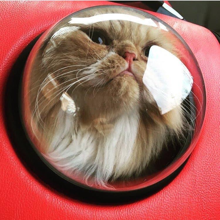 catpacks-mochilas-para-gatos5