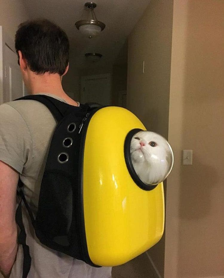 catpacks-mochilas-para-gatos6