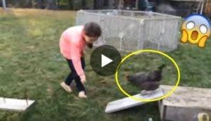 gallina-carrera-de-obstaculos