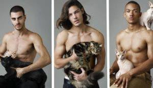 gatitos-y-modelos-id