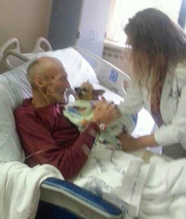 perrito-visita-en-hospital-enfermedad-terminal