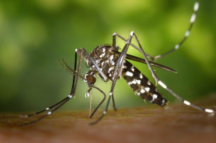 picadura-de-mosquitos-1