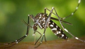 picadura-de-mosquitos-id