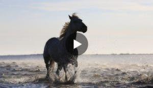 primer-chapuzon-de-caballo