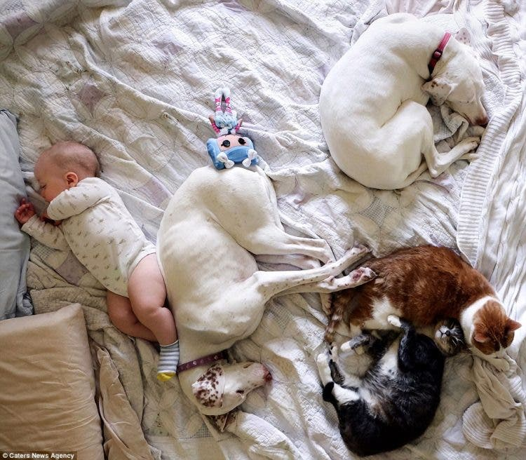 baby-puppy-napping-pics-11
