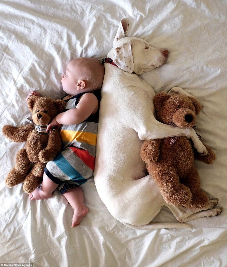 baby-puppy-napping-pics-12