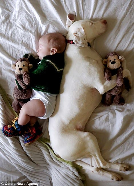 baby-puppy-napping-pics-13