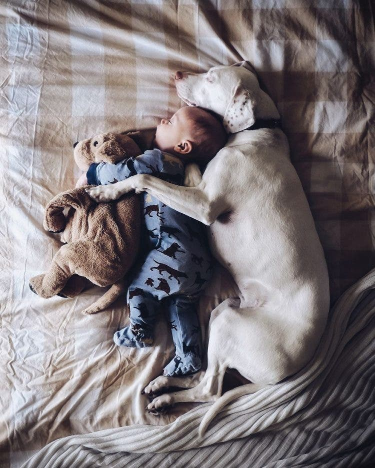 baby-puppy-napping-pics-17