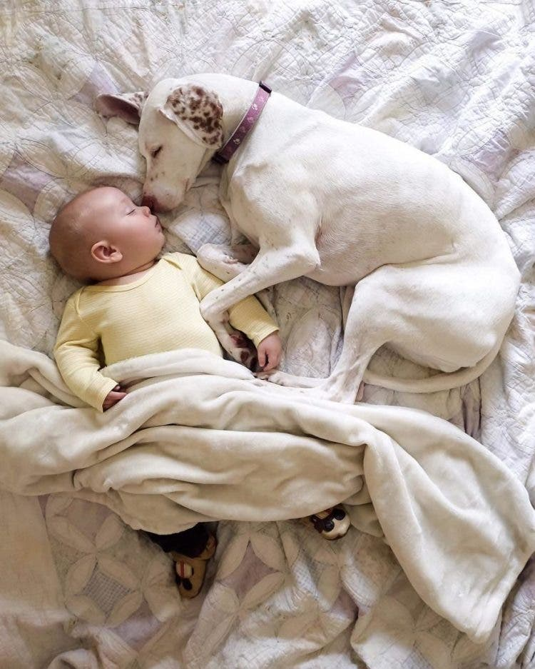 baby-puppy-napping-pics-18