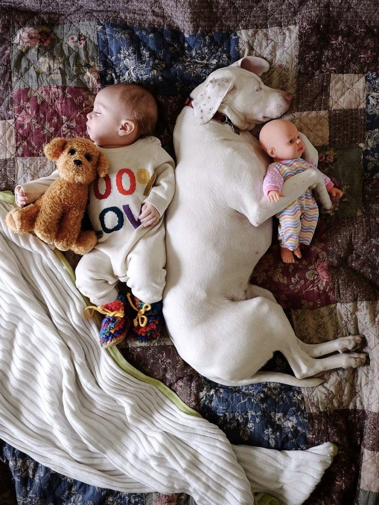baby-puppy-napping-pics-19