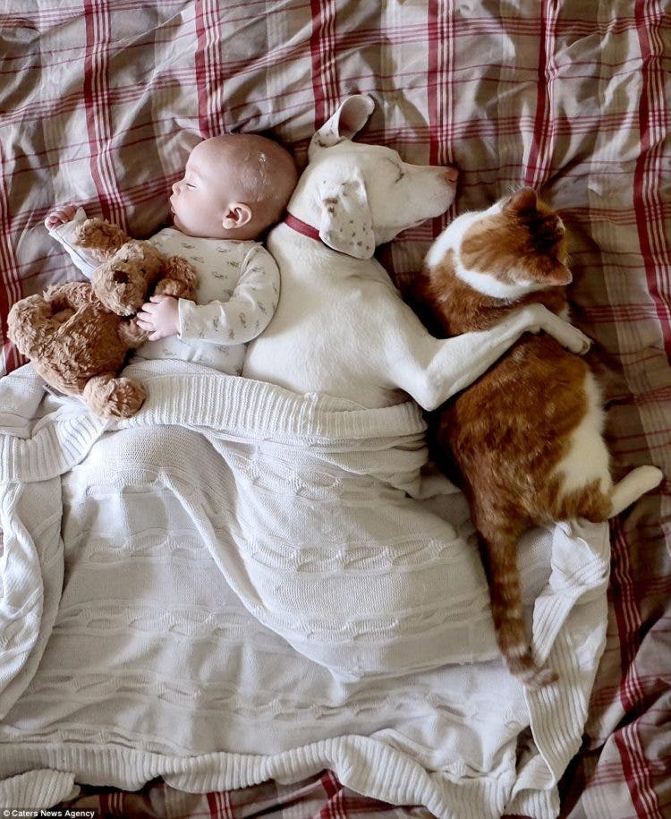 baby-puppy-napping-pics-4