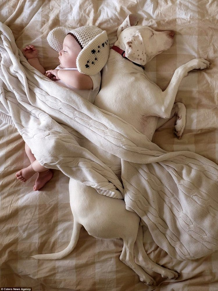 baby-puppy-napping-pics-7