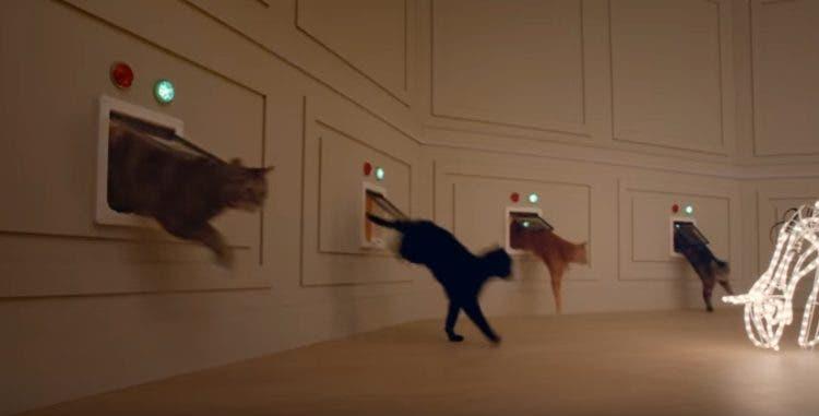 reaccion-de-gatos-navidad3