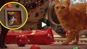 reaccion-de-gatos-navidad5