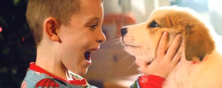 video-para-promover-la-adopcion-no-soy-un-juguete3