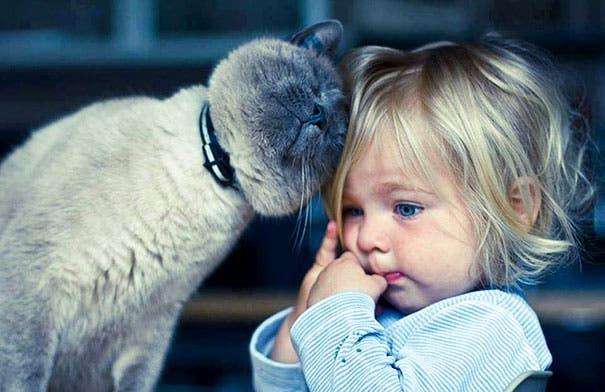 bebe-y-gato