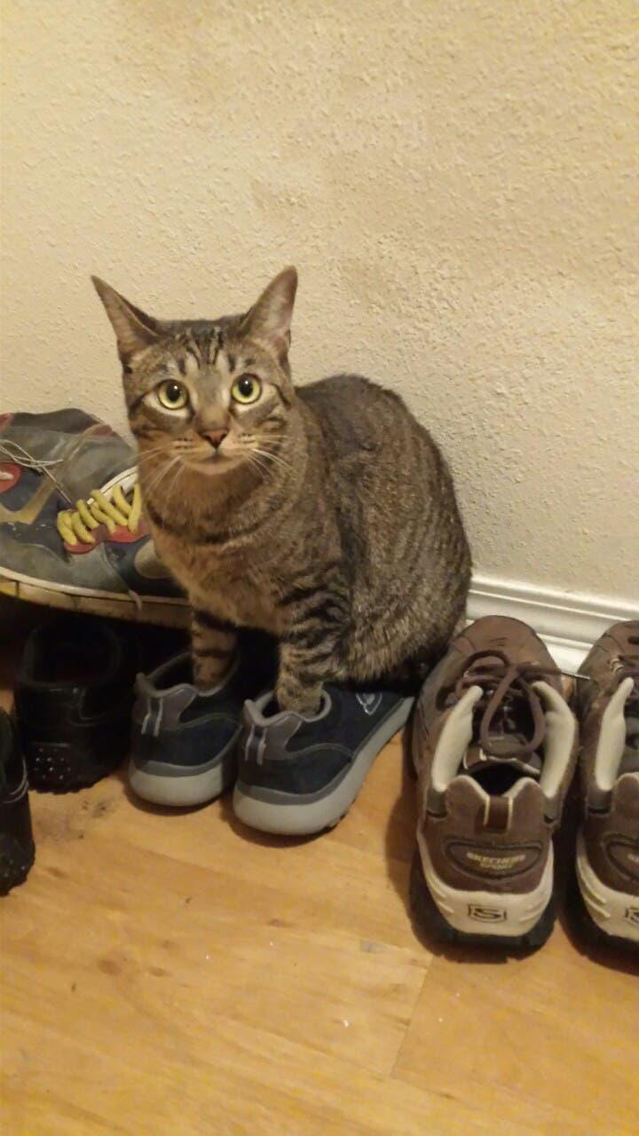 gatitos-usando-zapatos-11