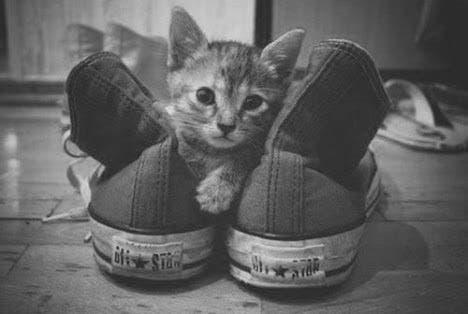 gatitos-usando-zapatos-13