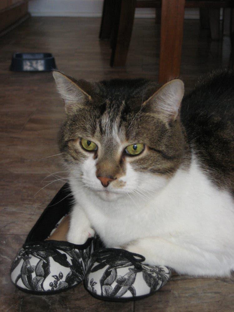 gatitos-usando-zapatos-16