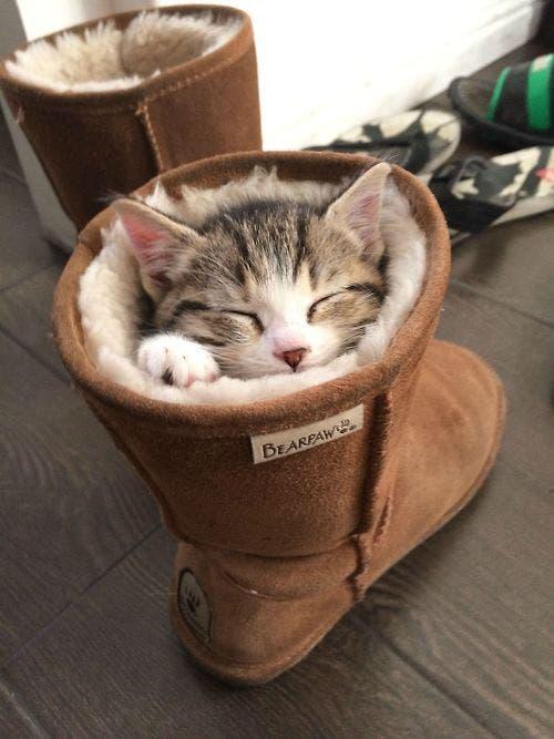 gatitos-usando-zapatos-17