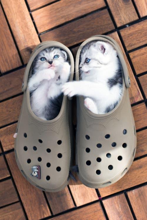 gatitos-usando-zapatos-18