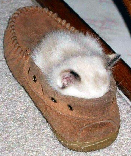 gatitos-usando-zapatos-19