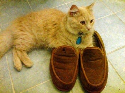 gatitos-usando-zapatos-2