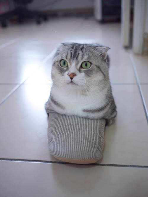 gatitos-usando-zapatos-3