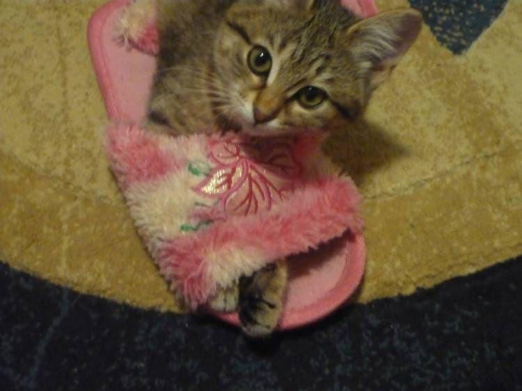gatitos-usando-zapatos-4