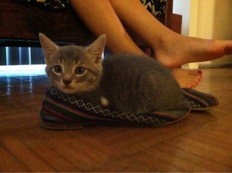 gatitos-usando-zapatos-7