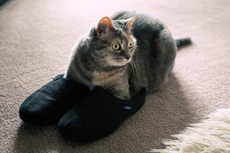 gatitos-usando-zapatos-8