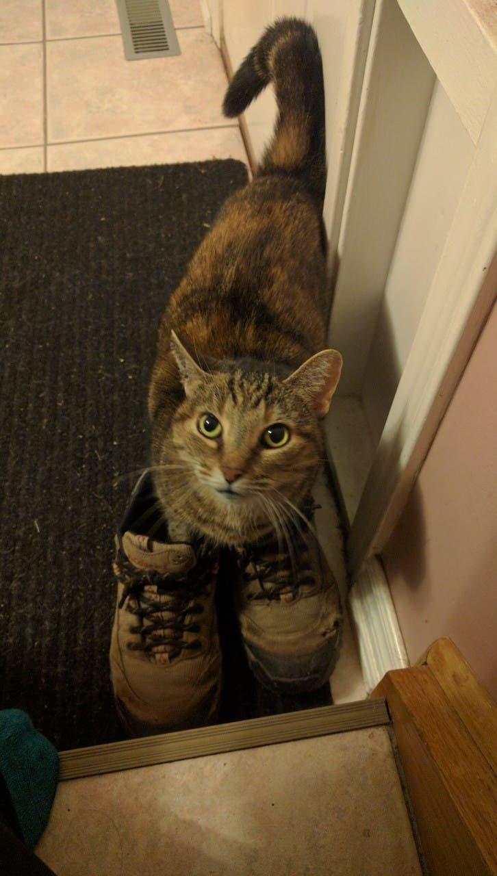 gatitos-usando-zapatos-10