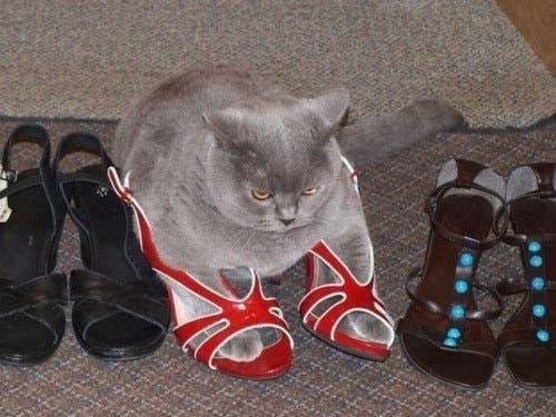 gatitos-usando-zapatos-9