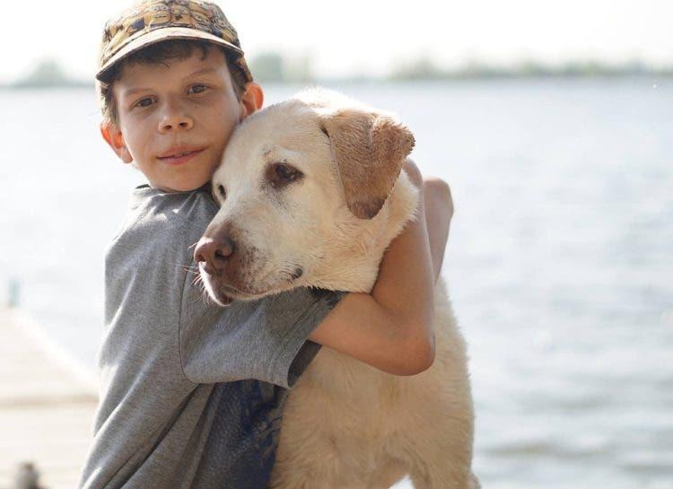 por-que-necesitamos-refugios-de-maltrato-familiar-con-mascotas2