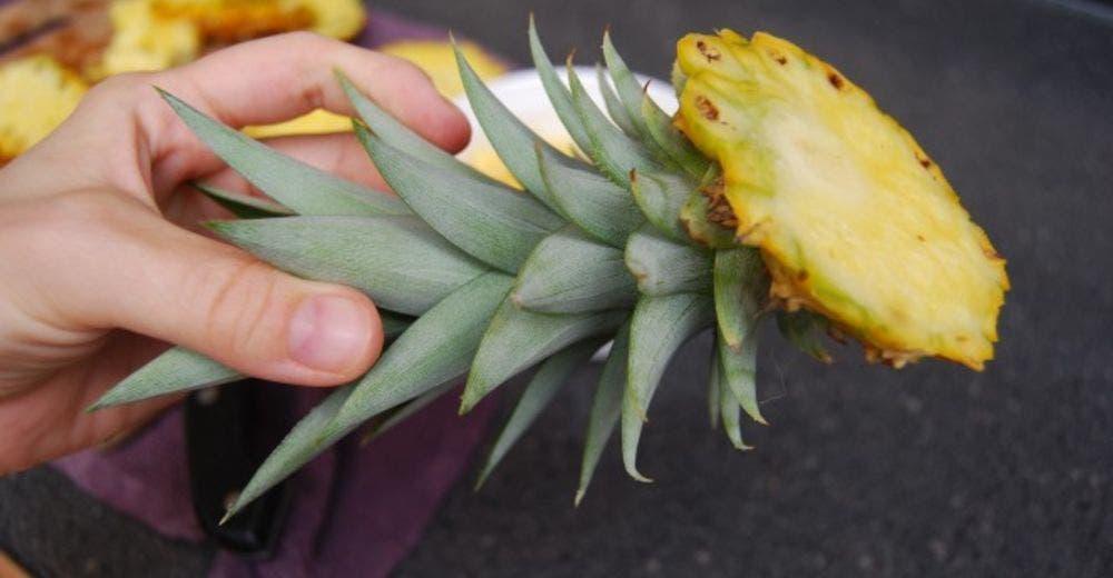 Aprende cómo plantar una piña en casa usando los restos de la fruta