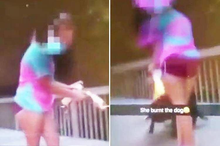 adolescentes chicas incendian fuego encendedor aerosol perro indefenso video snapchat