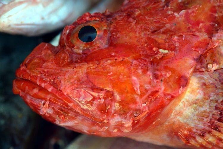 nueva isla basura plastico oceano pacifico sur microplastico agua espeso alteraciones adn corrientes marinas mutaciones desperdicio contaminación Algalita Marine Research Foundation Charles Moore cientificos conciencia ecologica
