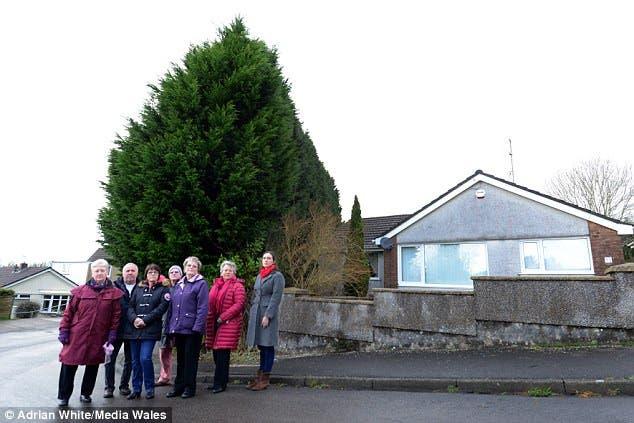 vecina deja a sus vecinos en la oscuridad al crecer sus arbustos tan altos que bloquea toda la luz y la vista la obligan a cortar y se rehusa Susan Rogers Yr Aran en la región de cal sur de Gales south wales