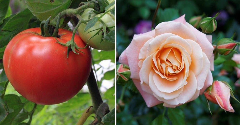 Muy pocos saben los 8 extraordinarios usos de este producto de estética para el jardín
