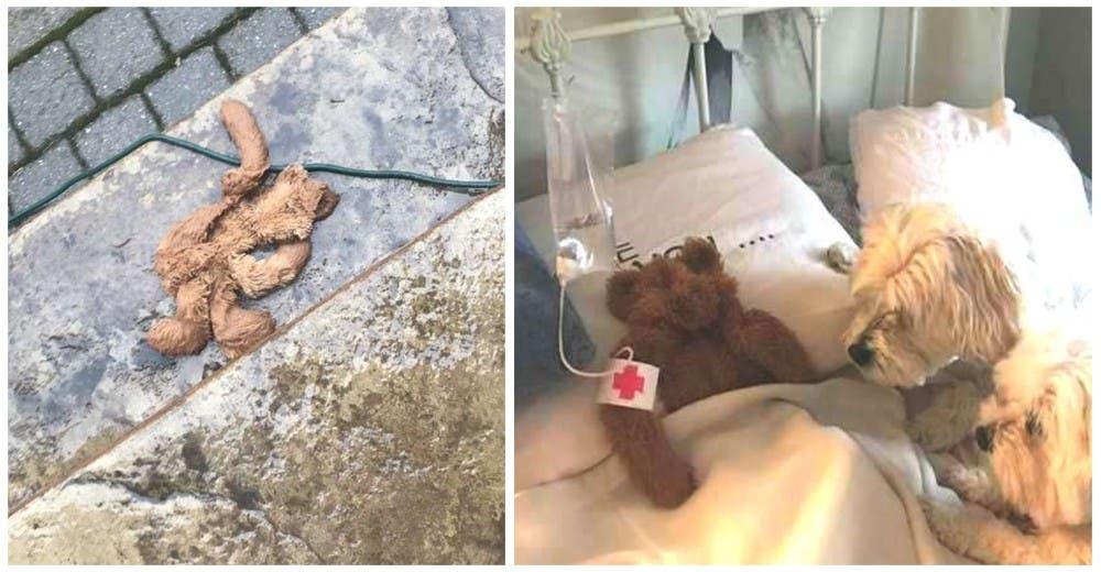 Papá «rescata» al juguete favorito de su perro dejado por accidente afuera en la tormenta