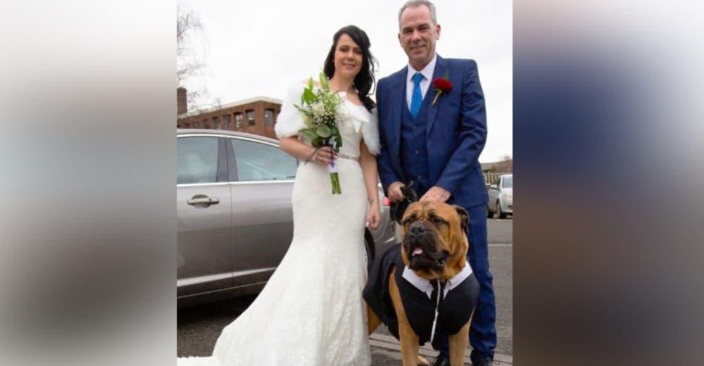 Adelantan su boda para que su perro enfermo pudiera acompañarlos