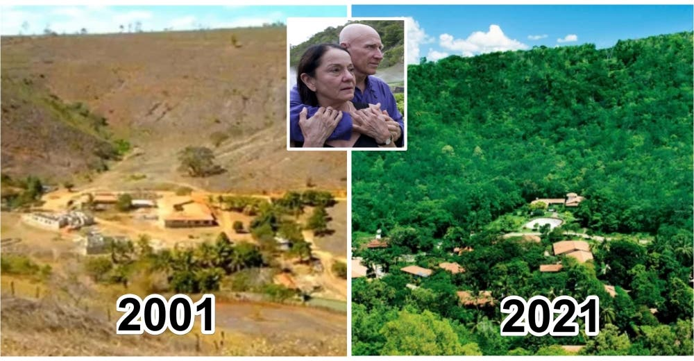 Plantan 2 millones de árboles para que un bosque vuelva a vivir