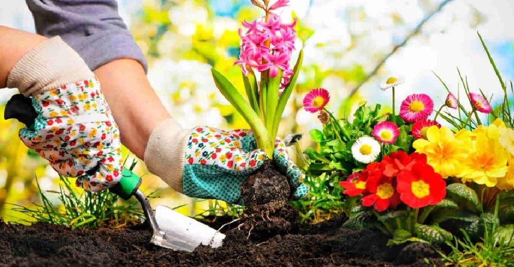 Expertos aseguran que cuidar un jardín puede ser tan beneficioso como 150 horas en el gimnasio