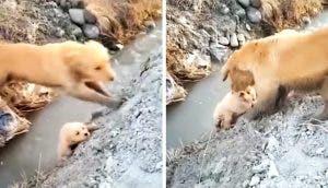 Una amorosa madre lucha sin descanso hasta que salva a su cachorrito en el fondo de una zanja