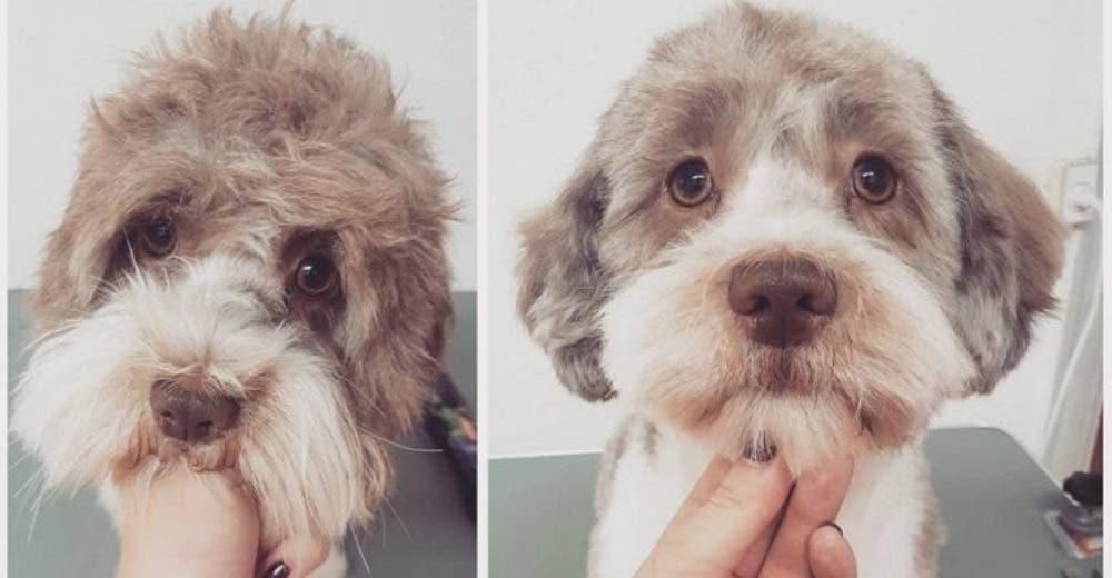 10 razones por las que los peluqueros caninos merecen cobrar más dinero por su trabajo