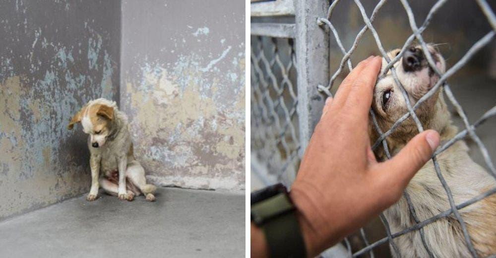 Adoptan a la perrita que por su tristeza solo podía levantar la cabeza para pedir una caricia