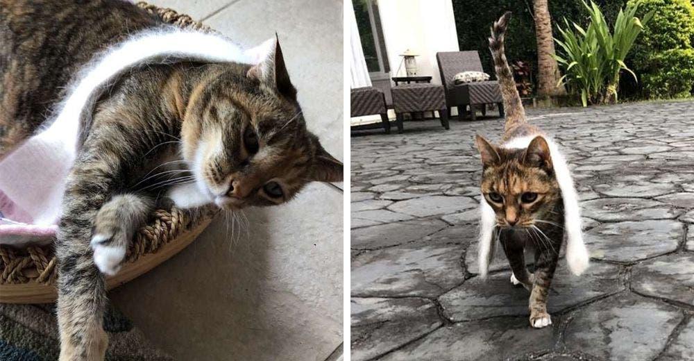 Una gata elegante está obsesionada con llevar su bufanda a donde quiera que va