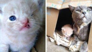 Una gata guía a sus rescatistas hasta sus bebés y encuentran a uno de ellos con guiño permanente