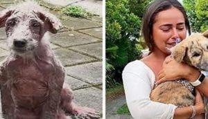 Salva a un perrito de la calle y transforma por completo su apariencia haciéndolo muy feliz